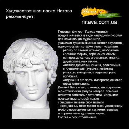 gipsovaya-figura-golova-antinoya 2