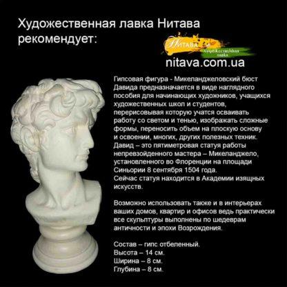 gipsovaya-figura-mikelandzhelovskij-byust-davida 4